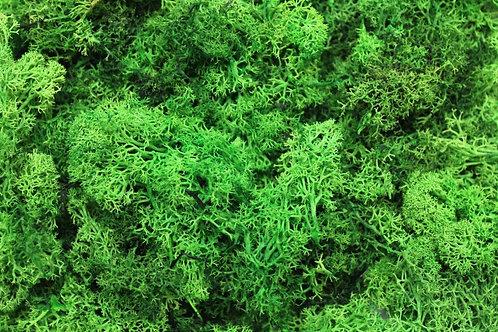 Mid Green Lichen - 250g