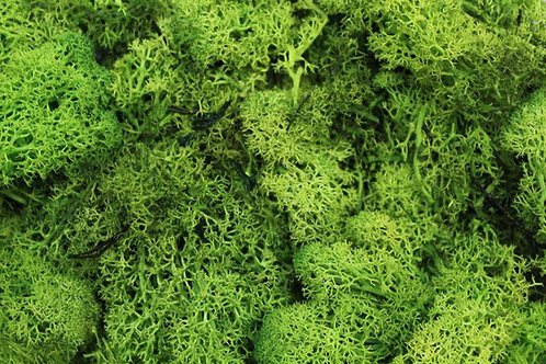 Light Green Lichen - 50g