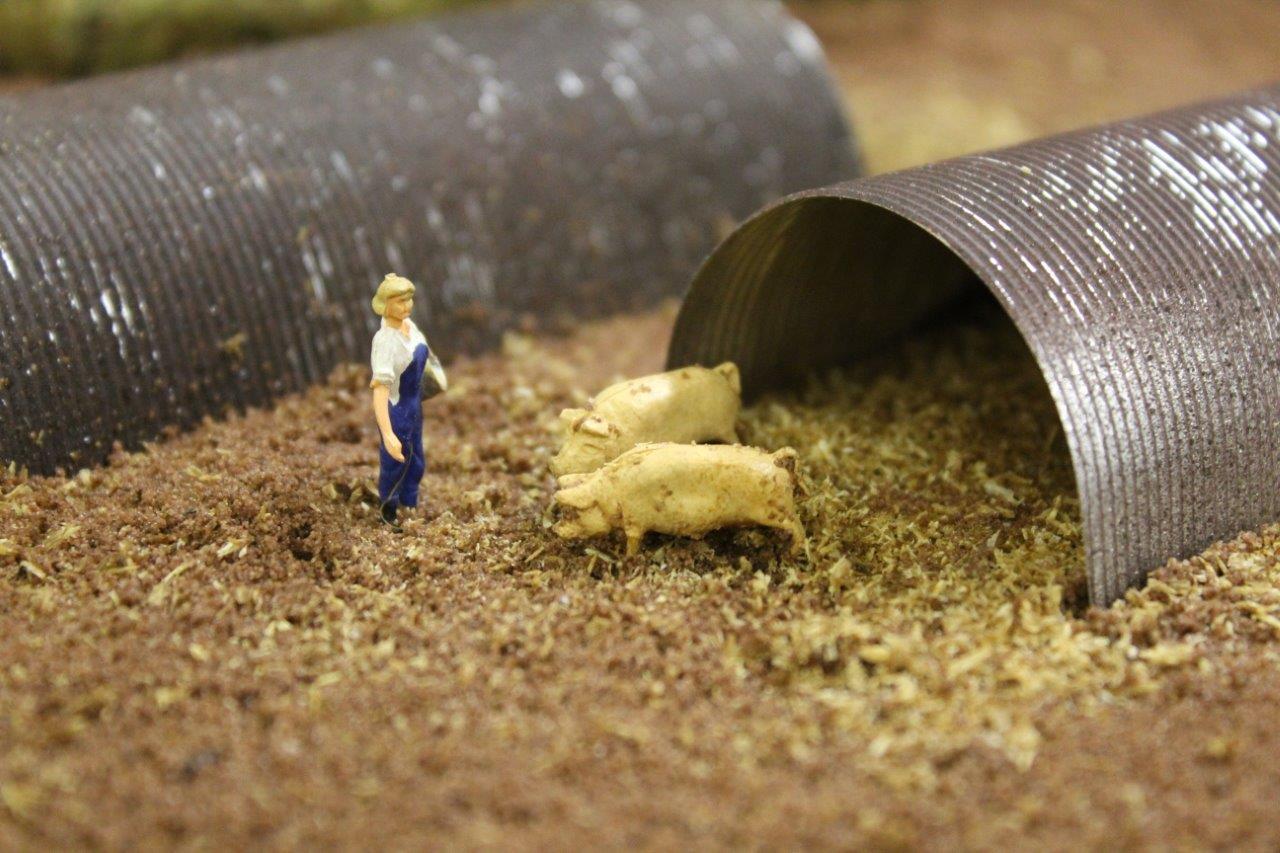 Farm OO woman feeding pigs