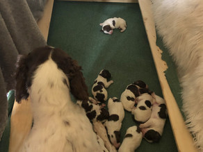 Puppies & More Puppies!!
