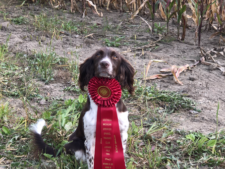 Judy 2nd Place in First Puppy Stake!