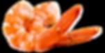 crevette-de-cortique_burned (1).png