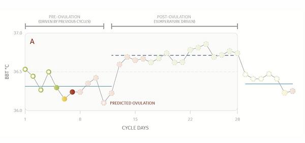 Daysy en ovulatie voorspelling.png