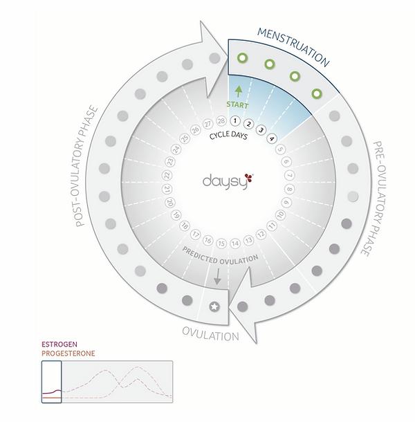 Daysy Cyclusverloop menstruatie .png