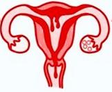 menstruatiefase.png
