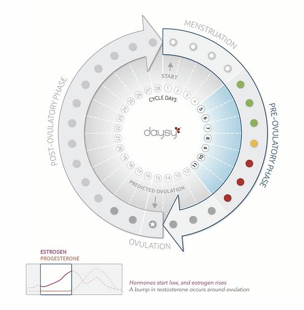 Daysy Cyclusverloop pre ovulatie.png