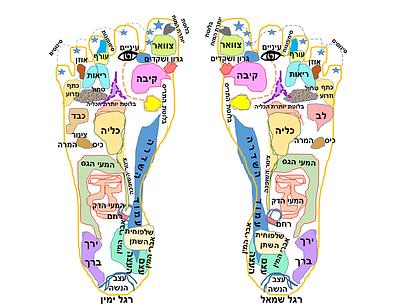 רגליים רפלקסולוגיה.png