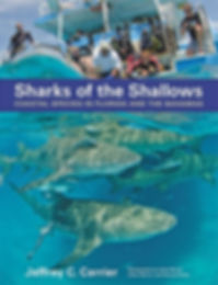 Sharks of the Shallows, shark book,