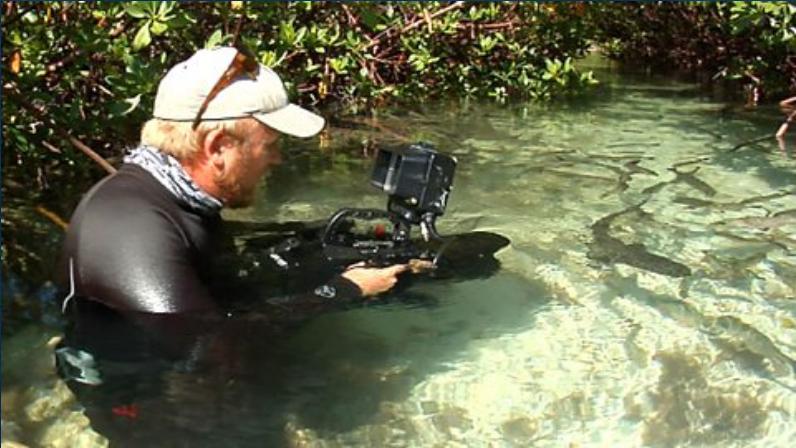 Underwater Cameraman Duncan Brake Films Lemon Sharks