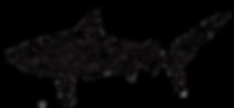 Underwater Cameraman sharks