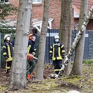 Einsatz 05/2021 - Baum auf Straße