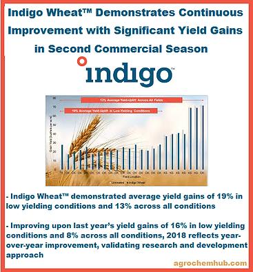indigo wheat.png