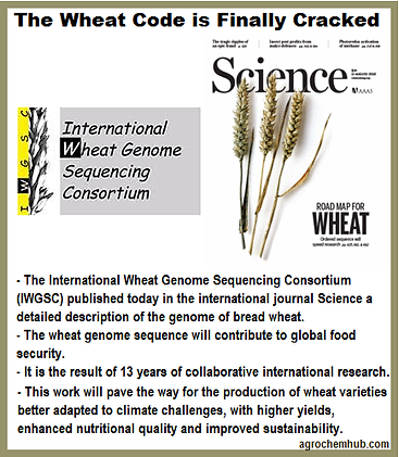 wheat code.png