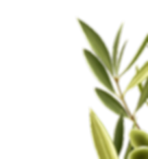 essential-olive-extract-product-upper-ri
