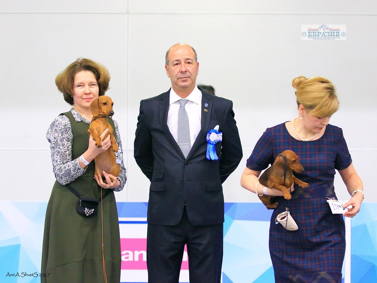 """Интернациональная Выставка собак """"Евразия-3"""" 2017 c экспертом и Ирой Яковлевой"""