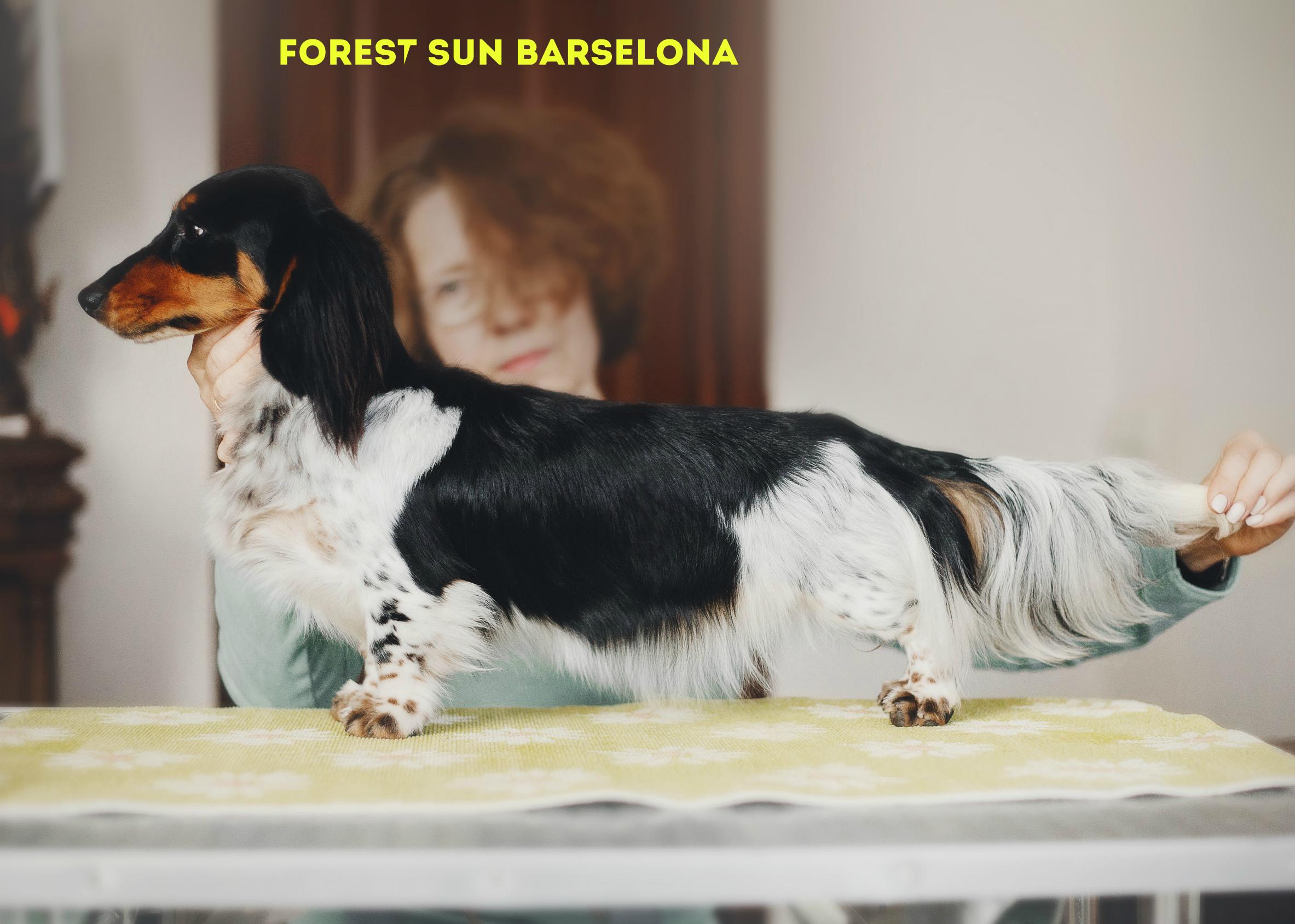 Forest Sun Barselona