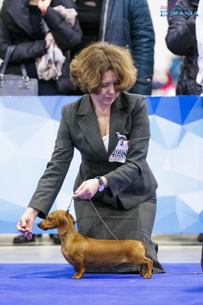 """Интернациональная Выставка собак """"Евразия-3"""" 2017"""