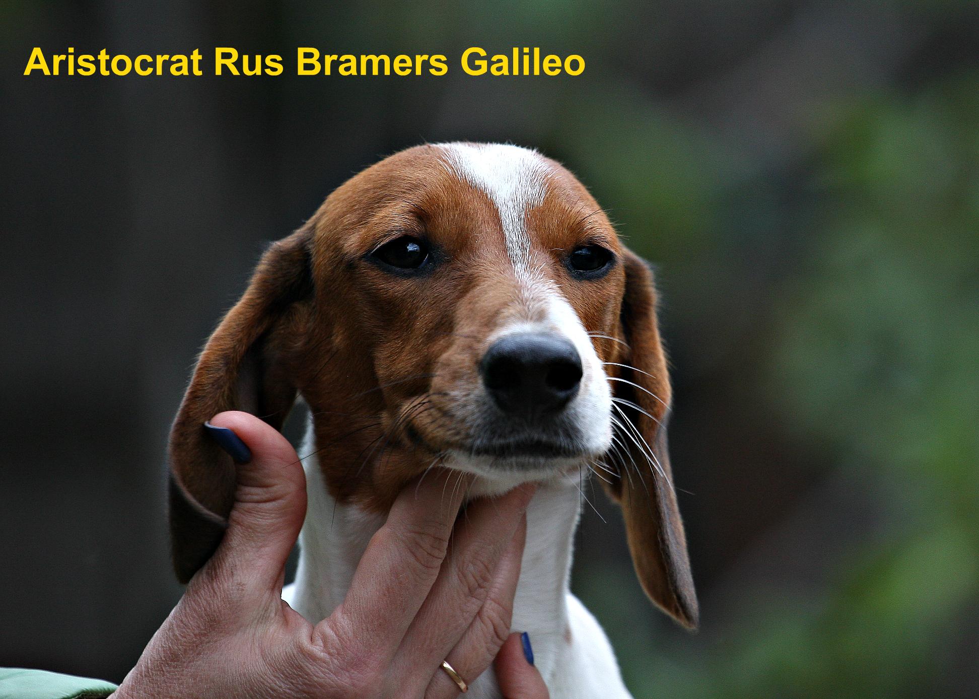 Aristocrat Rus Bramers Galileo