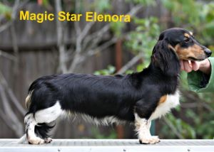 Magic Star Elenora