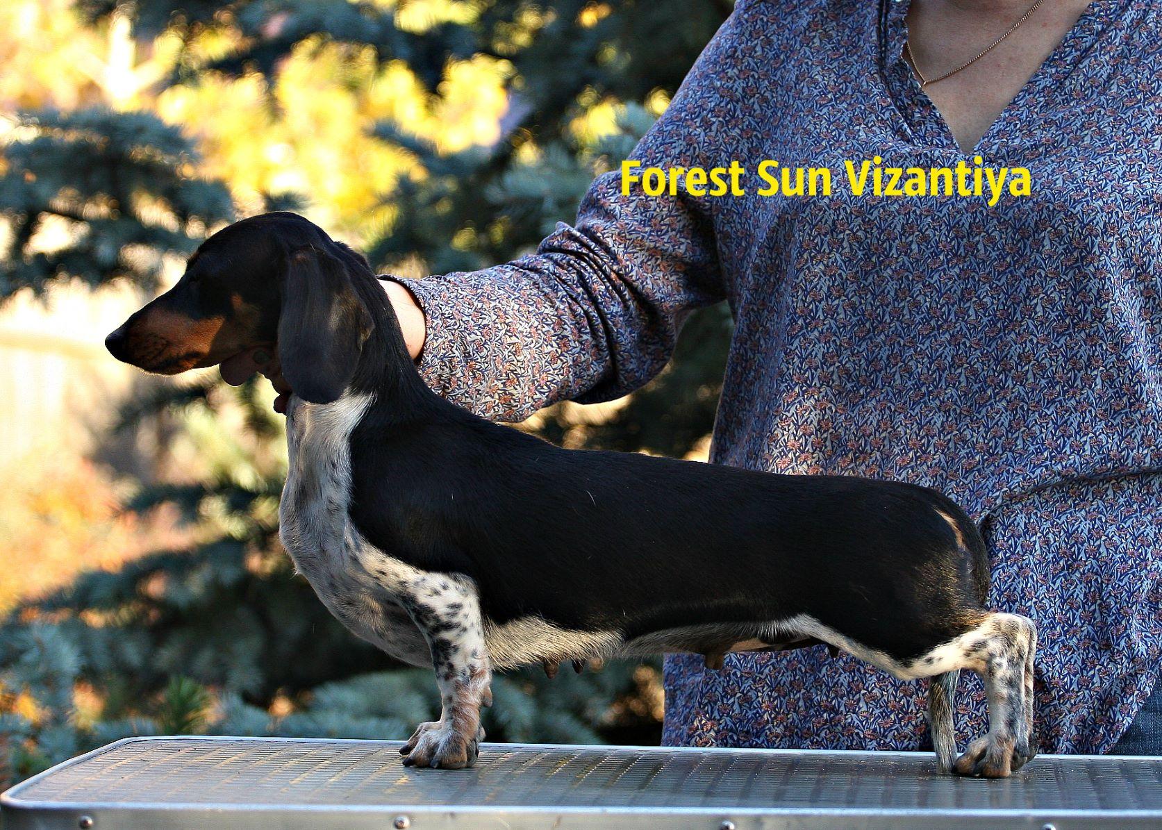 Forest Sun Vizantiya