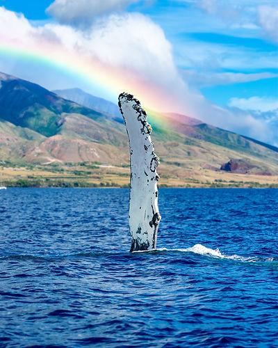 Humpback-Whale-Rainbow-Fine-art-hawaii.jpg