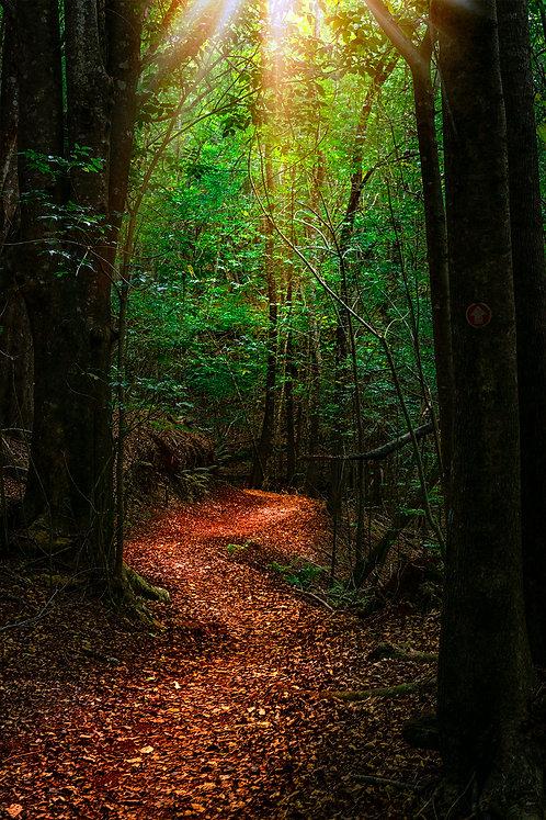 Makawao Forest