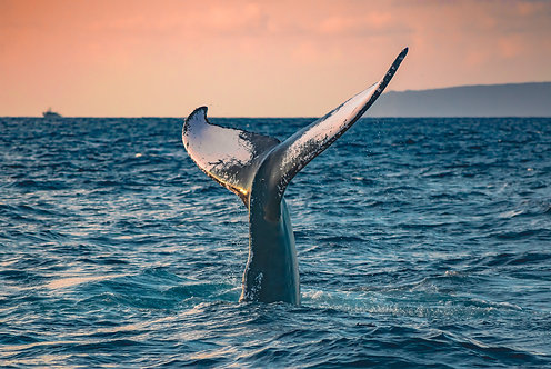 A Whale Named Spark