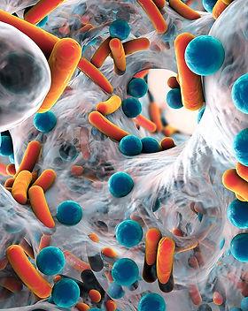 gut-bacteria.jpg