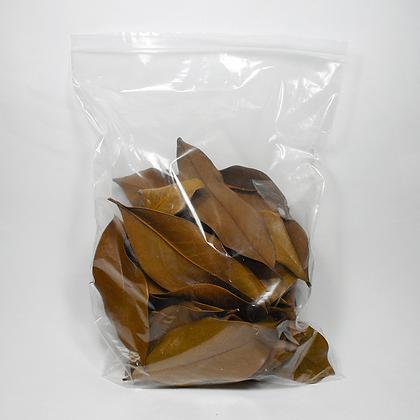 Folhas de Magnolia 100gr