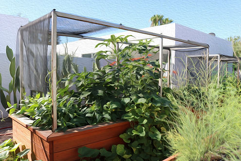 Thrive frame, thrive frame system, shaded garden beds, thrive and grow gardens, shade cloth, shade cloth frame, vegetable gardening