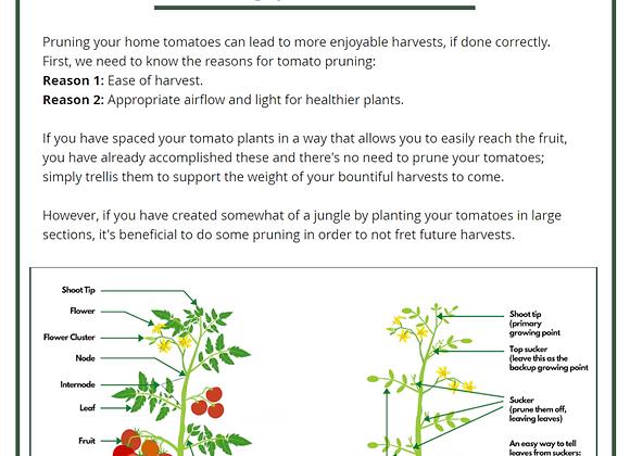 Tomato Pruning Guide (PDF)