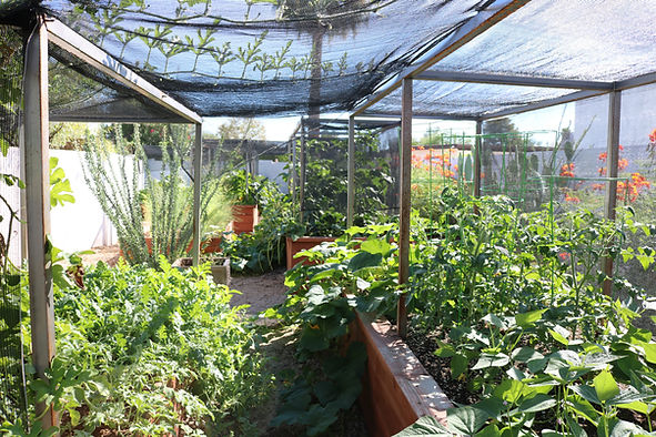 Thrive frame, thrive frame system, shaded garden beds, thrive and grow gardens, shade cloth, shade cloth frame, vegetable gardening, tucson