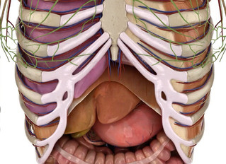 How to sing from the diaphragm - Inhale to your belly... NOT!