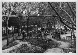 Жители оккупированного Армавира