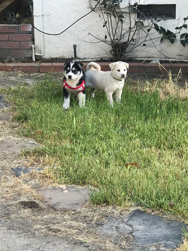 My two mutts