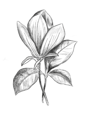 floral-drawing-2.png