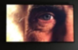 Screen Shot 2019-02-19 at 12.32.09.png