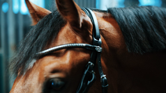 Die Suche nach dem Superstar - Junge Pferde sind die Zukunft
