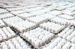 Wahdat Farm Fresh Eggs