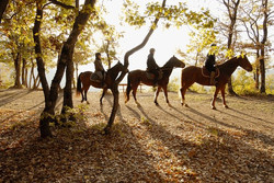 Horse riding/Equitation