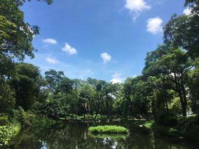大東公園-忘憂森林