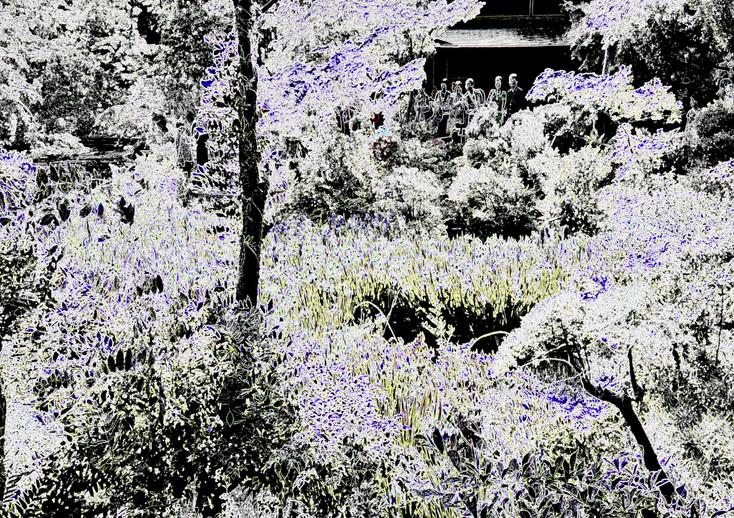 Iris Garden, Ashiday's Digital Art Gallery