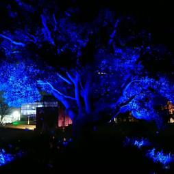 Night Tree, Ashiday Digital Art Store