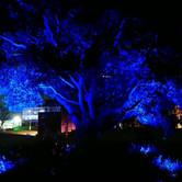 Night Tree, Ashiday' Digital Art Gallery