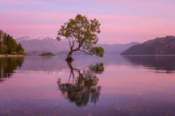 New Zealand | Wanaka | 2017