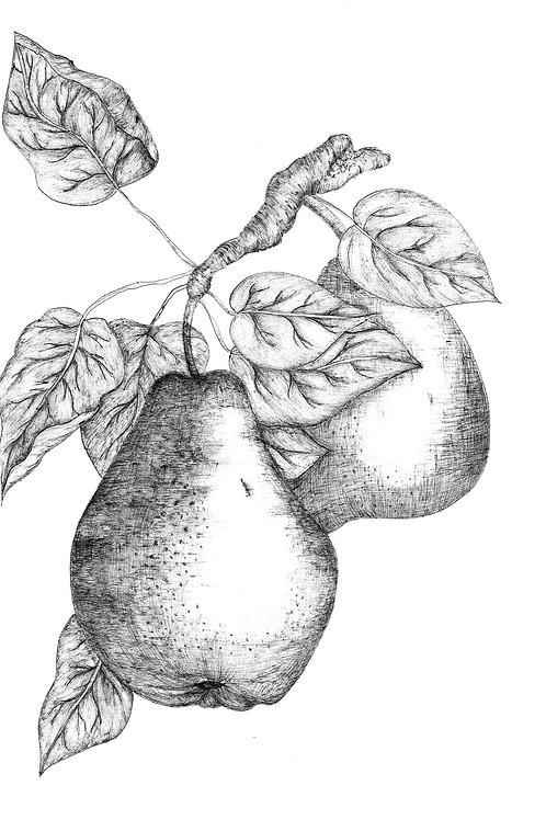 Botanical Pear Poster