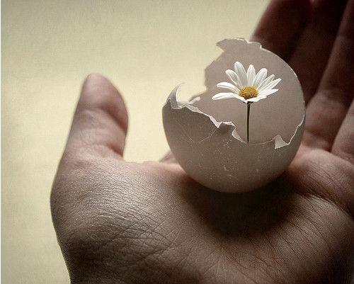 eggshellflower