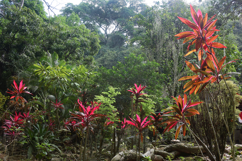 colombia-quebrada-valencia-flowers.png