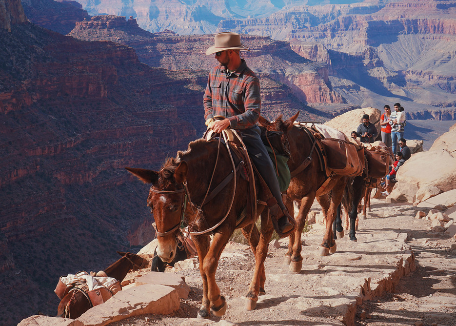 America-National-Park-Grand-Canyon-mules