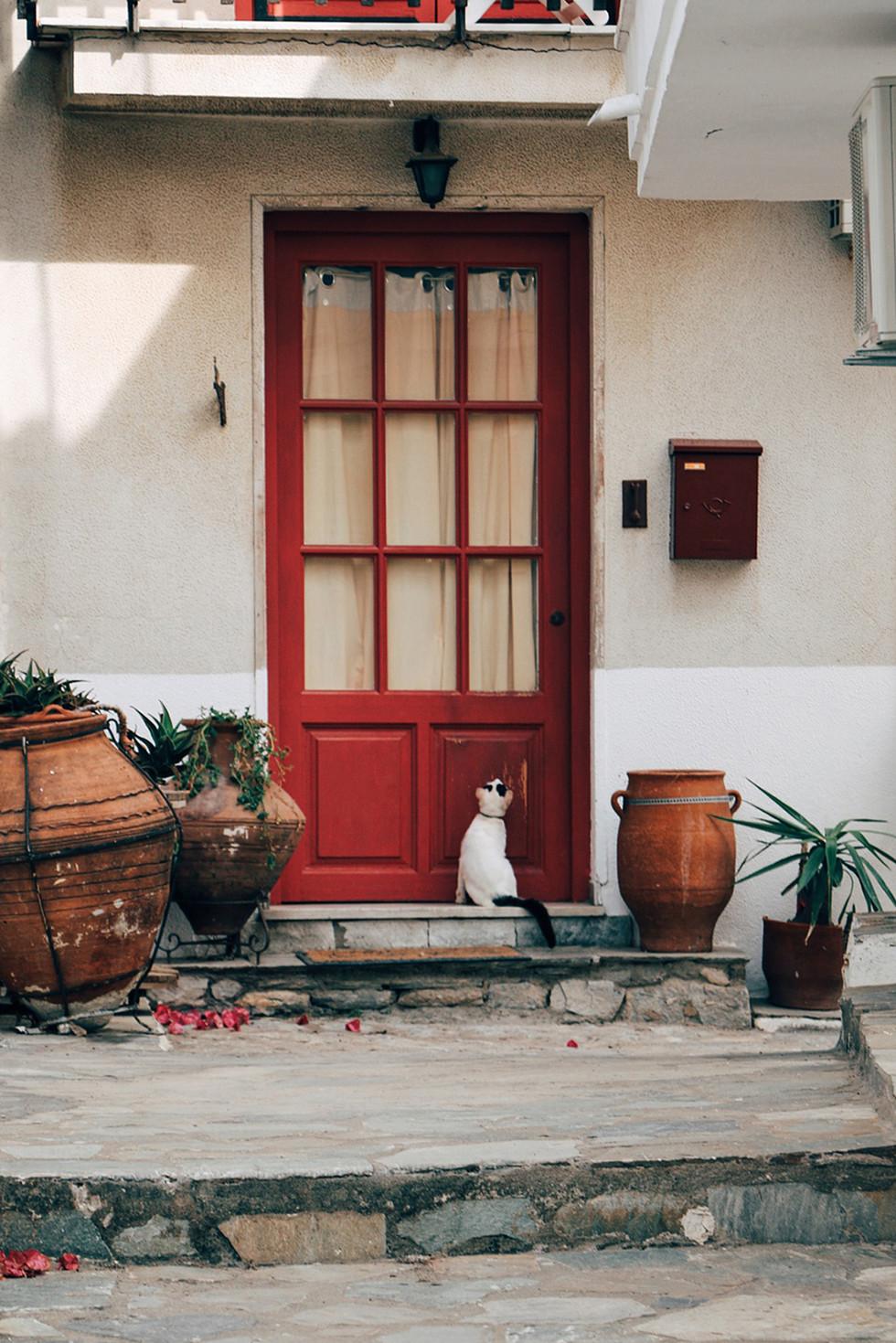 Greece-Skiathos-cat.jpg